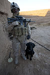 2nd Battalion, 7th Marine Regiment, patrol 130210-M-TJ655-095.jpg