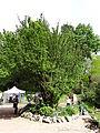 615969 małopolskie gm Michałowice Michałowice park 4.JPG