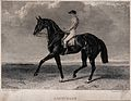 A race horse with jockey. Engraving by W. B. Scott after A. Wellcome V0020549.jpg