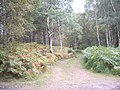 A track into the woods - geograph.org.uk - 1494834.jpg