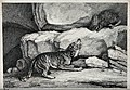 A wolf barking at a porcupine standing on the rock above it. Wellcome V0021607.jpg