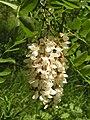 Ab plant 1998.jpg