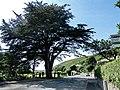 Aberdovey - panoramio (16).jpg