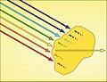 Absorción-amarillo -Iñaki Otsoa. CC. By ShA $no-.jpg