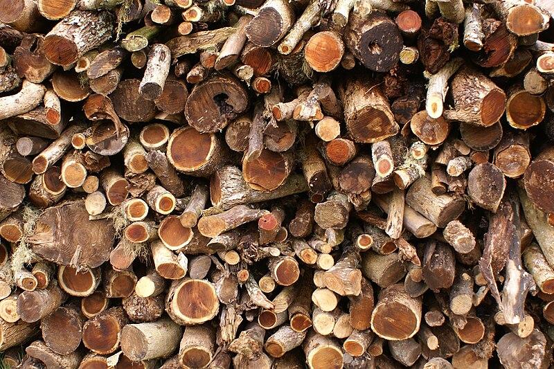 File acacia heterophylla stackoffirewood 1 jpg wikimedia for Acacia bois de chauffage