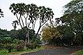 Acharya Jagadish Chandra Bose Indian Botanic Garden - Howrah 2011-02-20 1584.JPG