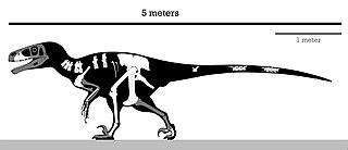 <i>Achillobator</i> Extinct dromaeosaurid genus from the Late Cretaceous