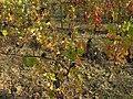 Acqui Terme (Italy) (23602816809).jpg