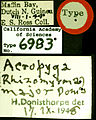 Acropyga major castype06983 label 1.jpg