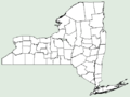 Adonis aestivalis NY-dist-map.png