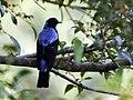 AfBluebird DSC9563 v1.JPG