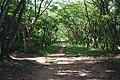 Allées au jardin botanique de l'UAC.jpg