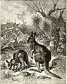 All about animals. Facts, stories and anecdotes (1900) (14591427118).jpg