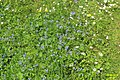 Alpine meadow flowers (Gru) (31113937454).jpg