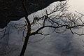 Altausseer See 78901 2014-11-15.JPG