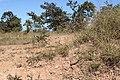 Alto Araguaia - State of Mato Grosso, Brazil - panoramio (1209).jpg