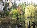 Altwasser in den Illerauen - geo.hlipp.de - 36928.jpg