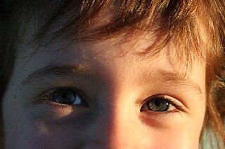 Svoje okolie a prírodu najčastejšie pozorujeme očami