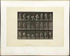 Animal locomotion. Plate 223 (Boston Public Library).jpg