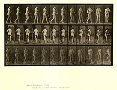 Animal locomotion. Plate 58 (Boston Public Library).jpg