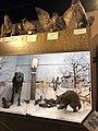 Animals in the Winter diorama-Roseau County Museum and Interpretive Center, Roseau, MN.jpg