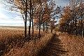 Ann and Sandy Cross Conservation area Calgary (37022775304).jpg