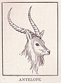 Antelope page 114.jpg