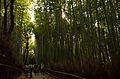 Arashiyama (8741759516).jpg