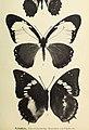 Archiv für Naturgeschichte (20322690482).jpg