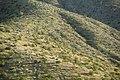 Arid hillside (13496716854).jpg