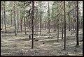 Arjeplog 979-1 - KMB - 16001000031724.jpg