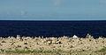 Aruba Wishing Stones (2905937033).jpg