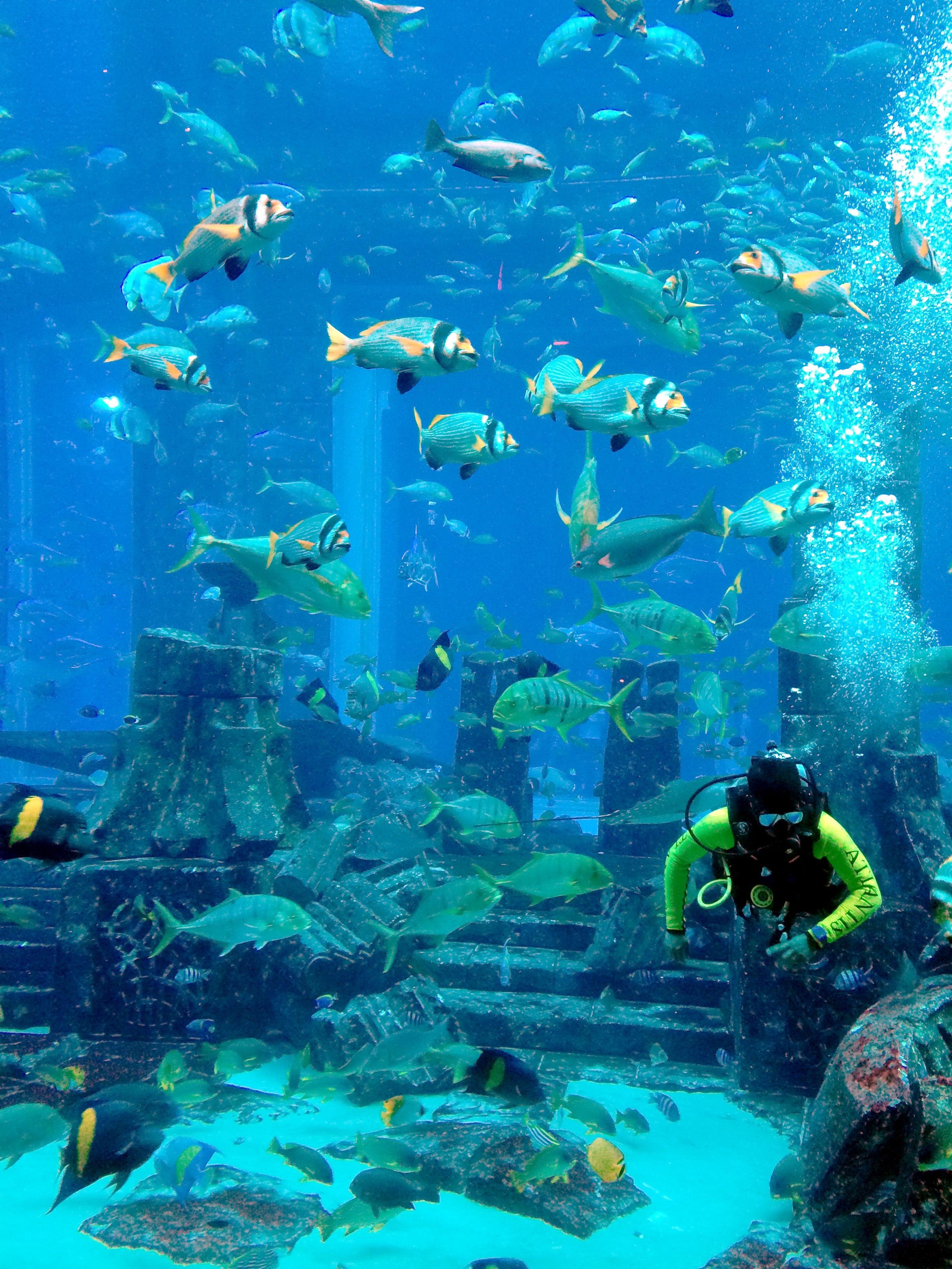 The Atlantis Aquarium