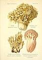 Atlas des champignons comestibles et vénéneux (Planche 68) (6358029603).jpg