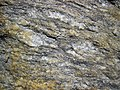 Augen gneiss (Precambrian; Rt. 93 roadcut next to the New River, Mouth of Wilson, Virginia, USA) 3 (30630788592).jpg