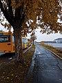 Autobuset.jpg