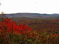 Autumn-mountains - West Virginia - ForestWander.jpg