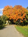 Autumn - panoramio (37).jpg