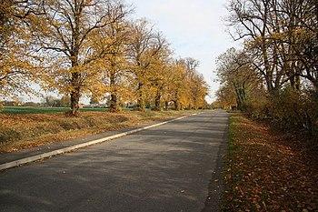 English: Autumn on High Street Autumnal view o...