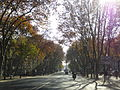 Avenida da Liberdade em Dezembro de 2013 (11570904086).jpg