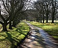 Avenue of beech trees - geograph.org.uk - 685906.jpg