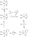 BINAPdiamineRu pathway - 2.png