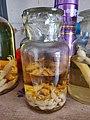 Baby mice wine (老鼠崽酒) - 1.jpg