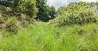 Balloërveld, natuurgebied in Drenthe 11.jpg