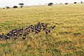 Balloon Safari 2012 06 01 3139 (7522671414).jpg