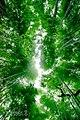 Bamboo Grove (215912597).jpeg