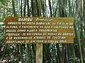 Bambu - panoramio.jpg