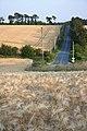 Barley field and road to Horringer - geograph.org.uk - 1385892.jpg