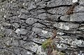 Basaltic Pillow Lava at Gurnard's Head in Cornwall.jpg