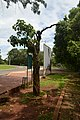 Baum im Parque Nacional do Iguaçu (22103749832).jpg